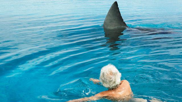 Fatal Shark Attack After Mick Fanning Escapes