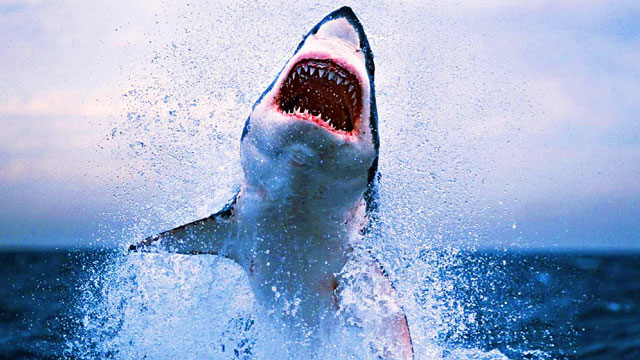 Another Shark Attack on Australia's East Coast