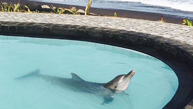 Wake Bali Adventure Dolphins Trapped in a Chlorinated Pool
